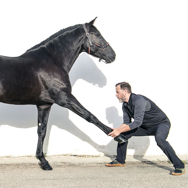 Instituto veterinario osteopatia caballo equino curso profesional Mario Soriano